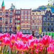 Belgica-e-Holanda-Florida-1
